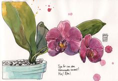 Nina Johansson orkidee_150301 Flower Sketches, Drawing Flowers, Watercolor Flowers, Art Sketches, Watercolor Paintings, Artist Sketchbook, Sketchbook Ideas, Paper Art, Paper Crafts