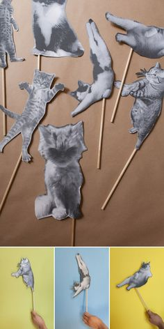 Cat Party | Oh Happy Day!