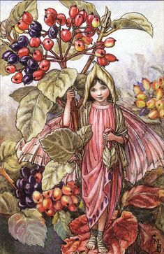"Vintage print 'The Wayfaring-Tree Fairy' by Cicely Mary Barker from ""The Book of the Flower Fairies""; Poem and Pictures by Cicely Mary Barker, Published by Blackie & Son Limited, London [Flower Fairies - Autumn] Cicely Mary Barker, Beatrix Potter, Kobold, Fairy Pictures, Vintage Fairies, Beautiful Fairies, Flower Fairies, Fantasy Illustration, Illustration Girl"