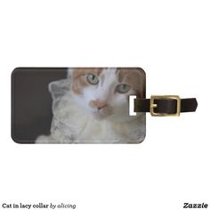 Cat in lacy collar