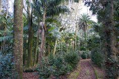 El parque Terra Nostra    www.parqueterranostra.com