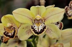 Balboa Park - Only Orchids