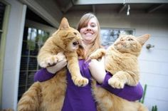 You will not believe these 15 (Very!) large cats that do not doubt how cool they are! Animal Gato, Mundo Animal, Animals And Pets, Funny Animals, Cute Animals, Angry Animals, Wild Animals, Maine Coon, Funny Cat Memes