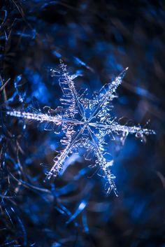 """l-eth-e: """" Snowflake {by Pete Tsai} """""""