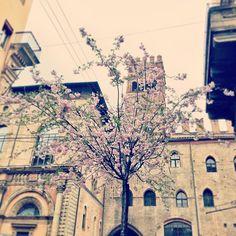 Primavera in Via degli Orefici, Bologna - Instagram by ale_glass