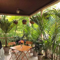 Add a Touch of the Tropics  Create a tropical getaway on your own deck. Here, six inexpensive palms from a home-improvement center screen the view and add tropical flair to an otherwise ordinary deck. A series of hanging baskets add color and fragrance to the scene.