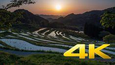 Oyama Rice Terraces - Chiba - 大山千枚田 - 4K Ultra HD