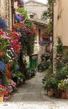 Travel & Wanderlust | Flowered Lane, Spello, Umbria, Italy