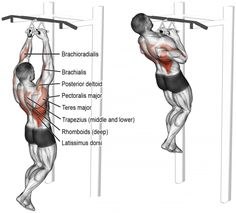 Fitness Motivation : Close neutral grip pull up. A compound pull exercise. - All Fitness Fitness Gym, Muscle Fitness, Physical Fitness, Mens Fitness, Fitness Motivation, Fitness Nutrition, Corps Fitness, Fitness Workouts, Back And Biceps