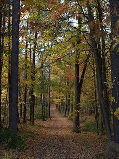 Fall Nature Walk #fallinct #centerofct Center of CT photo contest