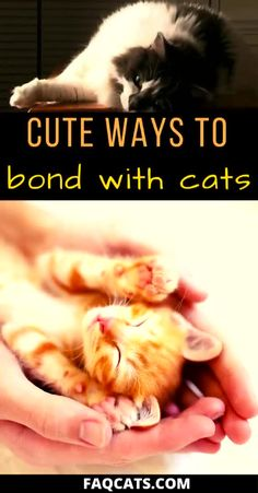 cat supplies Want a closer relationship with your cat Read our cat bonding tips to get started! These tips are perfect for first time cat owners. All Cat Breeds, First Time Cat Owner, Cat Care Tips, Pet Tips, Dog Care, Cat Reading, Cat Hacks, Kitten Care, Cat Behavior