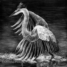 Amazing Expressions in Scratchboard Animal Portraits Scratchboard Art, Scratch Art, Black And White Artwork, Art Festival, Light Art, Art And Architecture, Art Boards, Light In The Dark, Heron