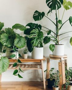 Haarkonhouse room with plants, house plants, indoor balcony, indoor garden, Decor, Room With Plants, Indoor Balcony, Urban Interiors, All About Plants, Farmhouse Garden, House Plants Indoor, Green Life, Plant Decor