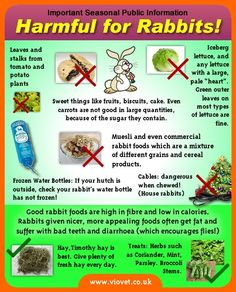 Seasonal things that can harm rabbits!    for cat and dog info click on the link:   http://www.viovet.co.uk/p164/Harmful_for_Pets/pages.html#.UMinWazwzN_