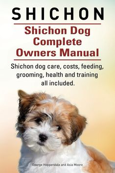 62 best all about shichon s and training images on pinterest in rh pinterest com