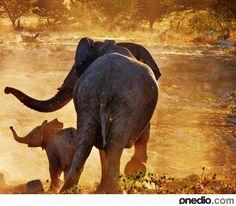 Afrika Savanlarından 30 Muhteşem Vahşi Yaşam Fotoğrafı