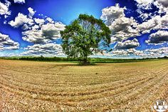 Lonely Tree in Spring | Flickr