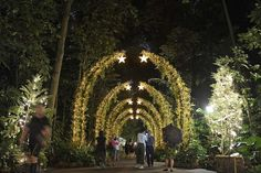 Christmas time in the city - what to see and do, Lifestyle News & Top Stories - The Straits Times