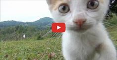 In this delightful video we meet 2 mother cats with their 6 kittens.