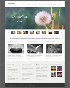 Buy Dandelion - Powerful Elegant WordPress Theme by pexeto on ThemeForest. THEME DETAILS Dandelion is a Powerful Premium WordPress Theme. This theme provides all the main functionality you wi. Best Portfolio Wordpress Themes, Wordpress Gallery, Wordpress Theme Design, Premium Wordpress Themes, Artist Portfolio Website, Web Portfolio, Jquery Slider, Web Design, Graphic Design