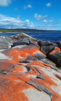 Bay of Fires, Tasmania, Australia
