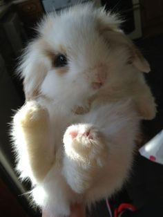 Make one special photo charms for your pets, 100% compatible with your Pandora bracelets.  Cute Baby Rabbit