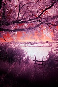 magnificent purple/orange scenery