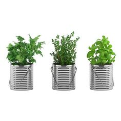 Fresh Herbs Growing, Buying, Storing, and Enjoying ❤ liked on Polyvore featuring plants, kitchen, objects and filler