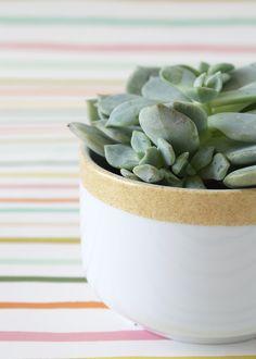 Glitter-Dipped Succulent Planter
