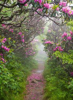 Pathway to Spring ~ Craggy Garden ~ North Carolina