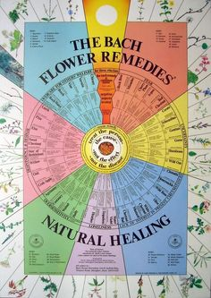Bach Flower Wall Poster Chart