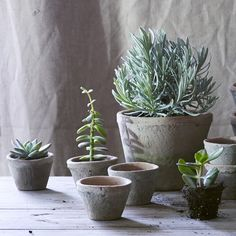 Eden Mossed Mini Terracotta Pots