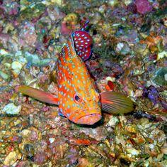 BANCO DE IMAGENES GRATIS: Viaje al fondo del mar I (peces, corales y arrecifes)
