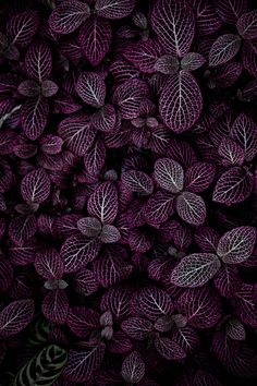 Purple, plant, texture and pattern HD photo by Hybrid ( on Unsplash Plant Wallpaper, Purple Wallpaper, Wallpaper Backgrounds, City Wallpaper, Fall Wallpaper, Wallpaper Ideas, Galaxy Wallpaper, Iphone 2g, Wallpapers Rosa