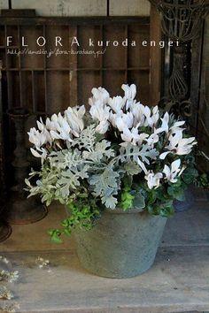 フローラのガーデニング・園芸作業日記-ミニシクラメン ガーデンシクラメン 寄せ植え