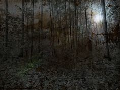 Nachts im Wald Wilderness Trail, Plants, Pictures, Woodland Forest, Animales, Plant, Planets