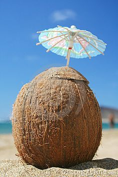 Photo about Coconut cocktail on the beach. Image of sand, summer, seaside - 769696 Coconut Grove, Coconut Shell, Coconut Water, Coconut Drinks, Tropical Christmas, Shell Beach, Pina Colada, Start Up Business, Luau