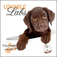 Loveable Labs 2013 Wall Calendar
