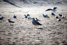 Ptaki | Birds #bałtyk #morze #baltic #sea #seaside #poland #polska #visitpoland #seeuinpoland