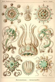 Artforms of Nature 1904 - Retronaut
