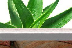 Sarı Sabır (AloeVera) ÖZELLİKLERİ Zambakgiller familyasındandır. 30 cm'ye kadar boylanabilen, duyarlı çokyıllıksukkulent (etli ve sulu) bitkidir. Aloeveranın (Sabırın) gövdesi ya yoktur veya 10-30 cm olabilir, şayet alt yaprakları kesilirse zamanla gövde ortaya çıkar. Kılıç biçiminde uca doğru inc