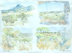 Art. Sketch.  Dry Season field sketches from Tazania by Alison Nicholls