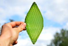 酸素を作り出す人工的な葉っぱ イギリスの公立大学Royal College of Artの卒業生Julian Melchiorriさんが、水と二酸化炭素を吸収して酸素を作り出す人工の葉っぱを開発したらしい