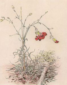 Soloillustratori: Beatrix Potter                                                                                                                                                     More