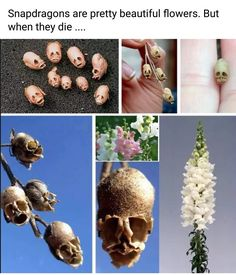 Really Funny Memes, Stupid Funny Memes, Haha Funny, Funny Stuff, Hilarious, Snapdragon Flowers, Creepy, Scary, All The Bright Places