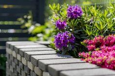 Sidewalk, Plants, House, Side Walkway, Walkway, Plant, Walkways, Planets, Pavement