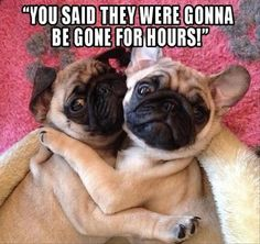 funny-animals-16-2 funny animal pictures pictures funny Animals