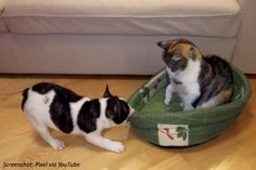 Can a dog win a bed from a cat determined to nap? Find out in this fuzzy math story!