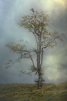~~Grandeur of nature | lone tree landscape | by Rucsandra Calin~~