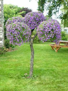 ЗАГОРОДНЫЙ ДОМ или Во саду ли, в огороде